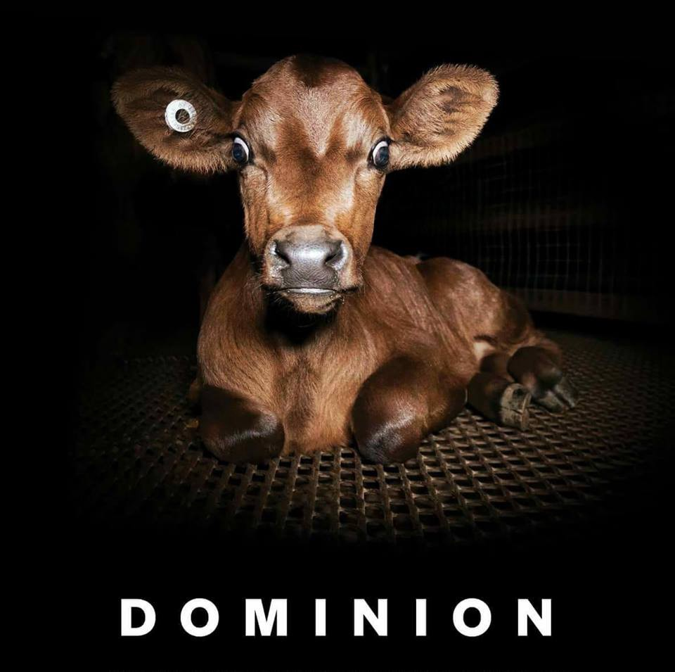 Documentaire Dominion review 2
