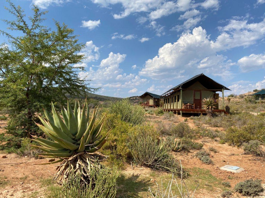 buffelsdrift game lodge luxury tent 1 week Zuid-Afrika Kaapregio