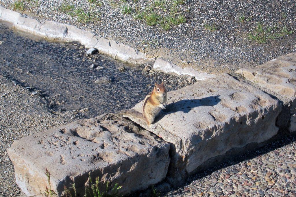 tips om yellowstone te bezoeken eekhoorn