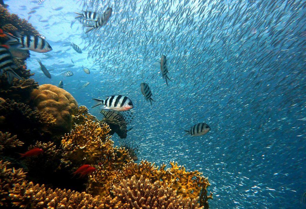 Netflix documentaire Seaspiracy koraal